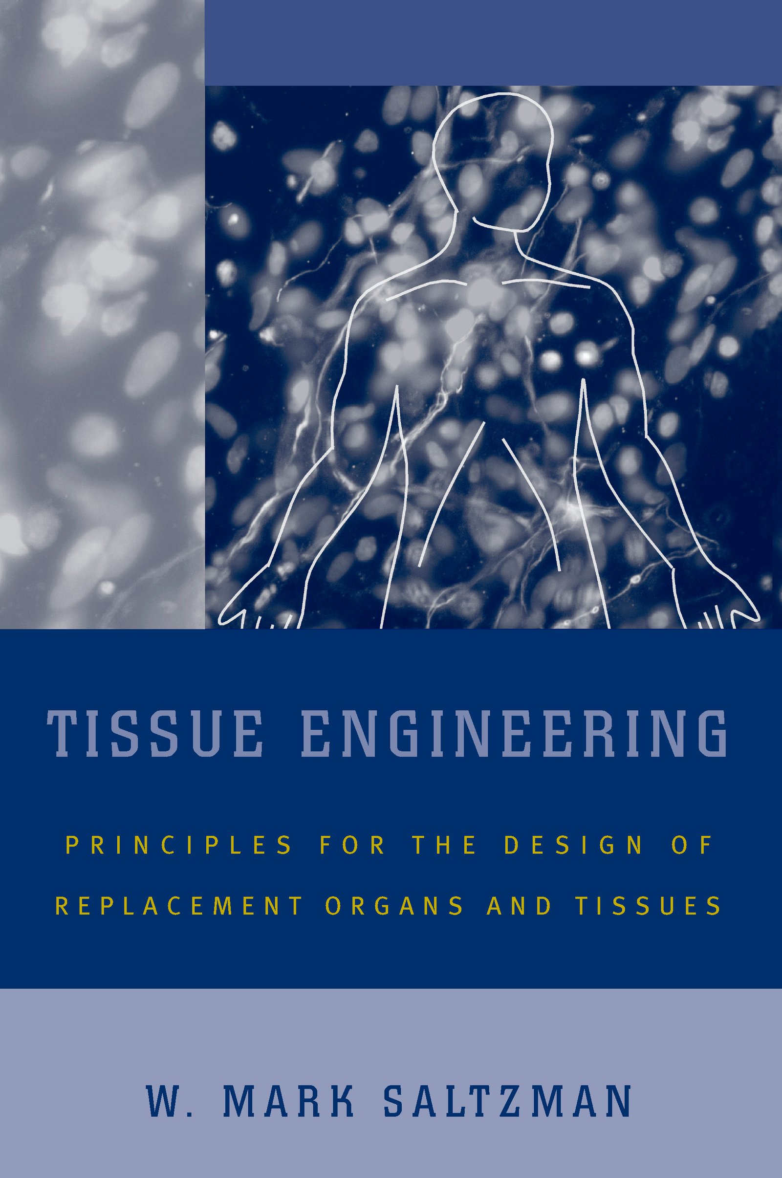 Tissue EngineeringEngineering Principles for the Design of Replacement Organs and Tissues